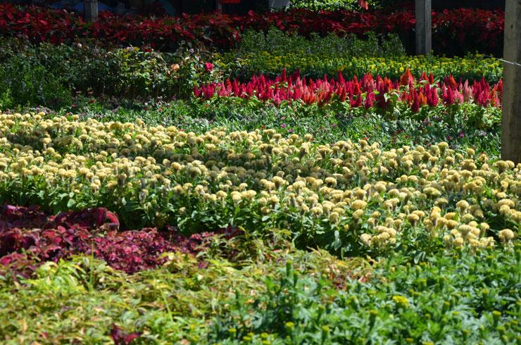 ศูนย์เพาะพันธุ์ไม้ดอกไม้ประดับ-04